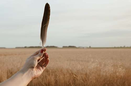argentina person holding brown bird feather grain
