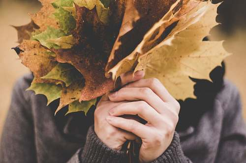 leaf person holding bundle of autumn maple leaves autumn