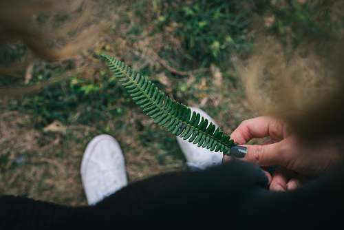 holding person holding green leaf fir