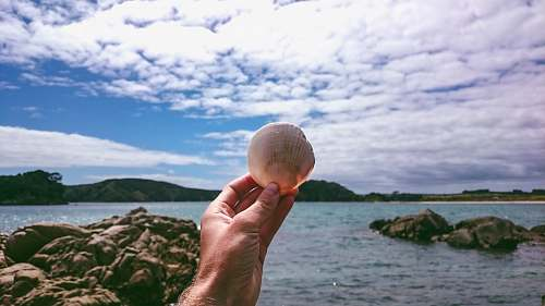 ocean white seashell outdoors