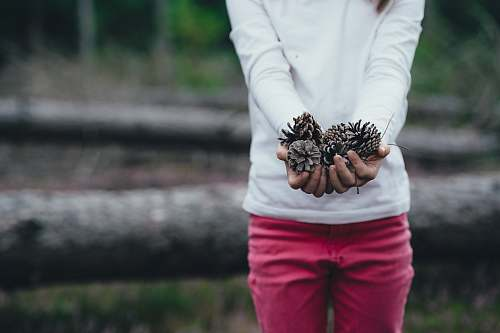 human woman holding brown pinecones person