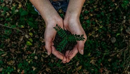 human green plant hand