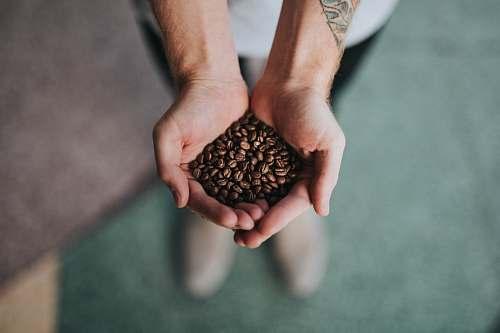 coffee handful of coffee beans hand