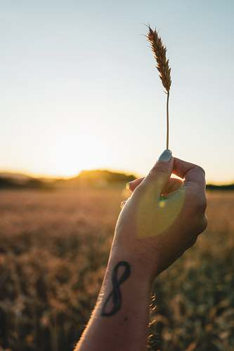 human person hods brown wheat hand