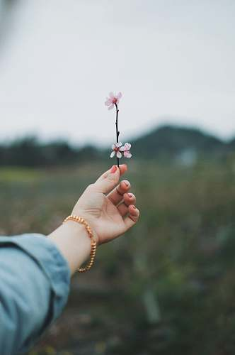 human person holding pink petaled flower people