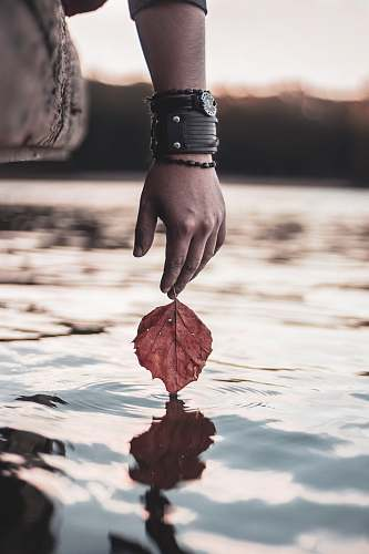 human person holding red leaf above calm water people