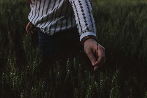 human person touching grasses hand