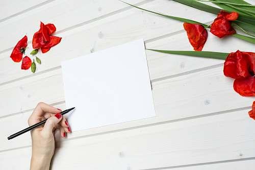 people woman holding pen beside blank paper human