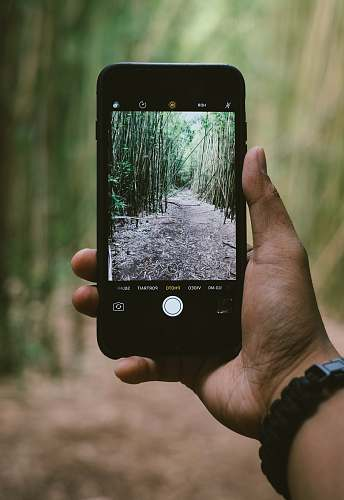 iphone person holding smartphone while taking photo of green plants mobile