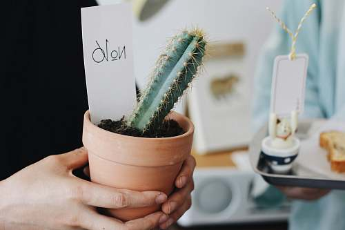 cactus person holding a pot of green cactus potted plant