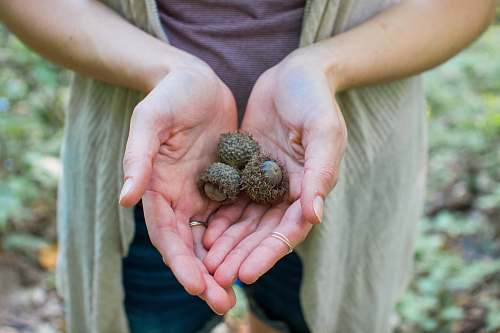 acorn person holding fruits seed