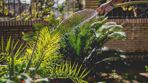 water person holding garden hose while watering plant garden