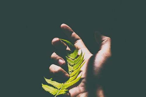 fern person holding green leaves hold