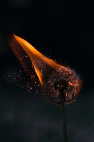 nature burning white dandelion dark