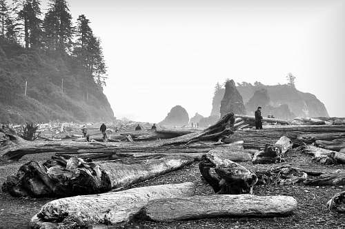 grayscale photography of wood logs