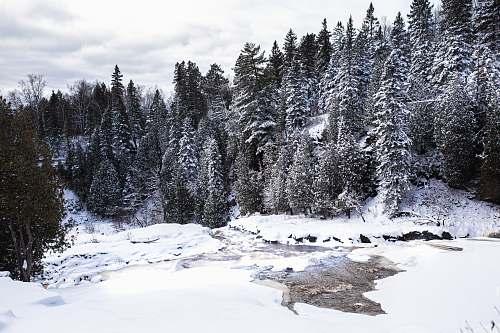 plant river between pine trees tree