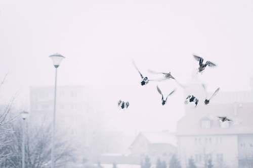 white bird flying near post lamp snow