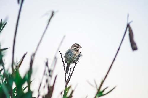 bird bird on stem tree
