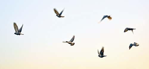 bird birds artwork flying