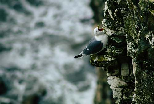bird black and white bird on rock cliff