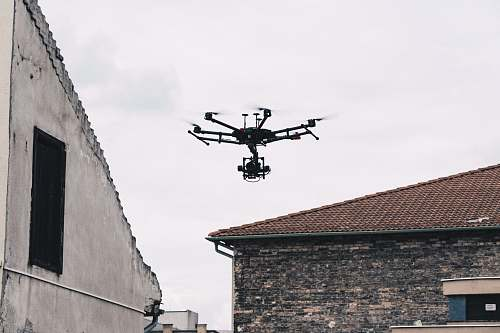 bird black video drone flying