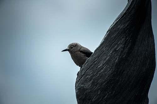 bird brown bird perched on tree blue
