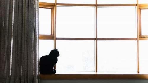 cat cat sitting on window during daytime window