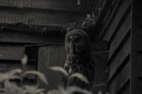 building grayscale photography of owl owl