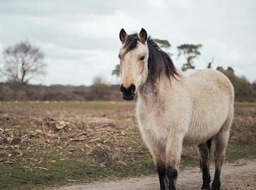 horse photography of black and beige pony standing on pathway near grass field foal