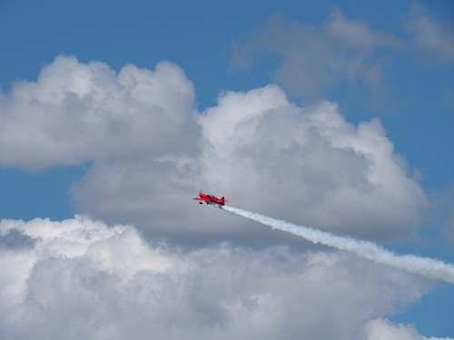bird red biplane flying
