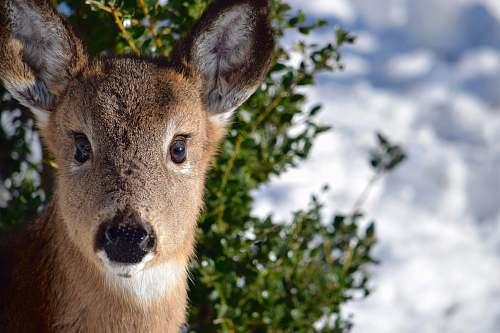 deer selective focus photo of brown deer mammal
