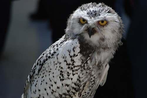 bird selective focus photography of owl beak