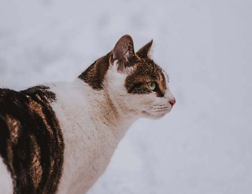 cat shallow focus photo of white and brown cat mammal
