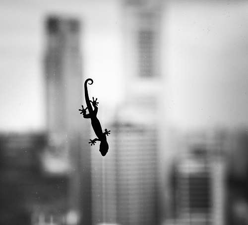 black-and-white silhouette of house lizard singapore