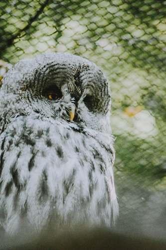 bird white and gray owl owl