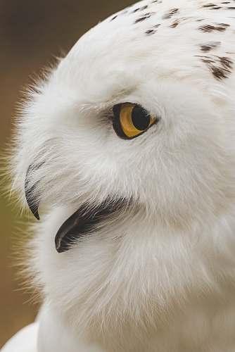 bird white owl in shallow focus photography beak