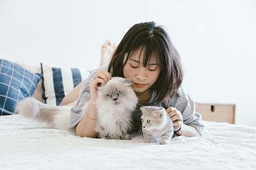 cat woman lying beside two kittens pet