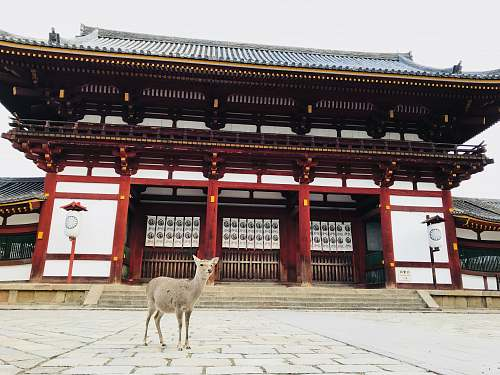 building gray animal behind white and red building during daytime shrine