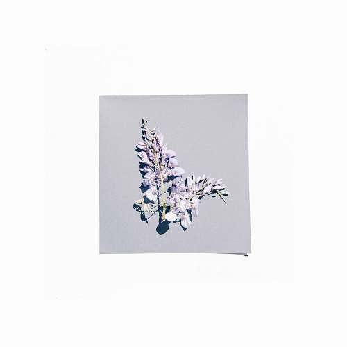 photo pottery purple-petaled flower porcelain free for commercial use images