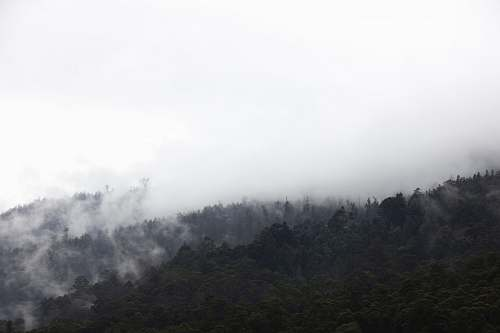 fog aerial photography of mountain with green leaves tree during misty day huon valley council