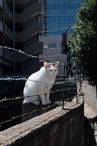 handrail cat sitting in front of barbed wire cat