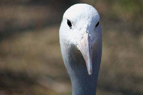 bird focus photography of animal head animal