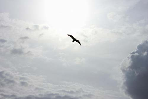 clouds silhouette of bird flying sun
