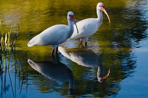 plant two white birds on body of water water