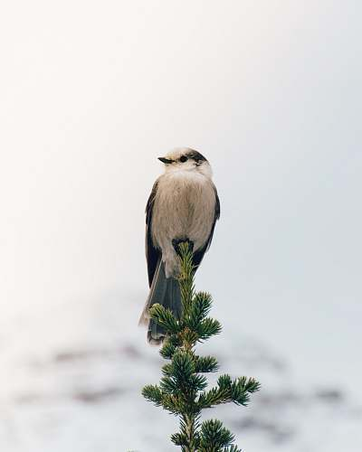 animal white and black bird perched on green twig during daytime tree