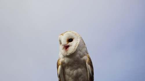 animal white and brown owl beak