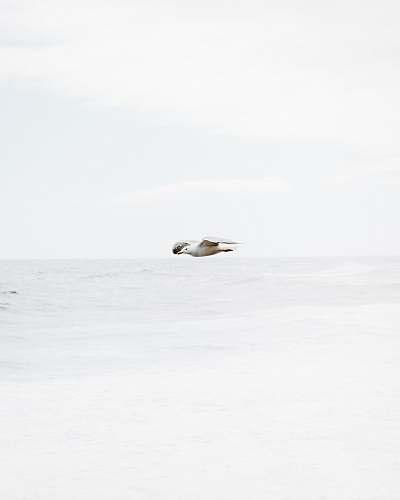 animal white bird in flight over body of water white