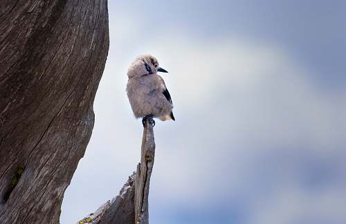 feather white bird perched on branch during daytime perched