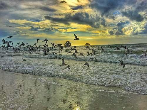 bird pigeons flying on seashore beach