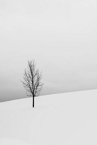 tree bare tree in middle of snowy field plant